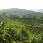 palaung hill